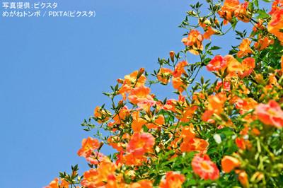 Pixta_6350373_m_2_2
