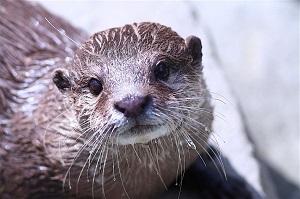 Otter1145555_1280